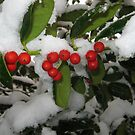 Feb. 19 2012 Snowstorm 33 by dge357