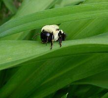 Bumblebee  by SenskeArt