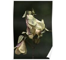 Dried Beauty Poster