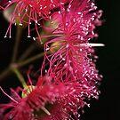 In Hot Pink by Joy Watson