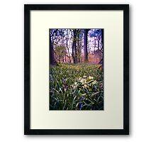 Salcey Forest in Spring Framed Print