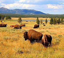 Where The Buffalo Roam by Mikeb10462