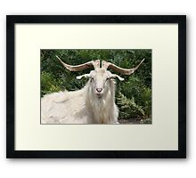 Capricorn Rising Framed Print