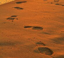 footprints in the sand  by warren dacey