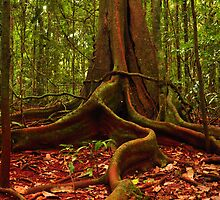 reaching out from the forrest  by warren dacey