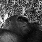 Sleeping gorilla by bluetaipan