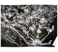 Feb. 19 2012 Snowstorm 34 Poster
