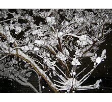Feb. 19 2012 Snowstorm 34 Photographic Print