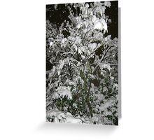 Feb. 19 2012 Snowstorm 36 Greeting Card