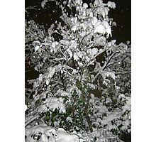 Feb. 19 2012 Snowstorm 36 Photographic Print