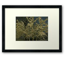 Feb. 19 2012 Snowstorm 41 Framed Print