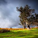Rural Light - Adelaide Hills, SA by Ben Goode