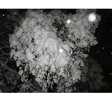 Feb. 19 2012 Snowstorm 46 Photographic Print