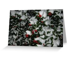 Feb. 19 2012 Snowstorm 49 Greeting Card