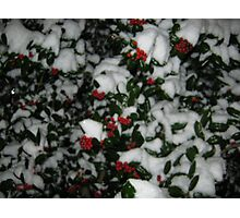Feb. 19 2012 Snowstorm 49 Photographic Print