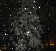 Feb. 19 2012 Snowstorm 59 by dge357