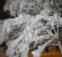 Feb. 19 2012 Snowstorm 65 by dge357