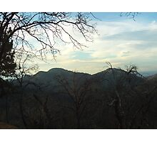 Barren Trees In The San Bernardino Mountains Photographic Print