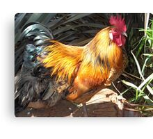 Farm talk - Artemis in glorious colour Canvas Print
