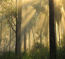 Morning Sunrise Marlo Vic. by helmutk
