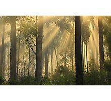 Morning Sunrise Marlo Vic. Photographic Print