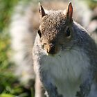 Squirrel in Regents Park by ellismorleyphto