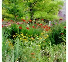 Garden At The Zoo Photographic Print