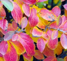 Background of vivid red leaves of autumn bush close-up Sticker