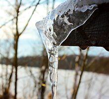 Frozen beauty by João Figueiredo