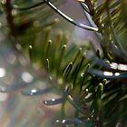 Blue Spruce in the Morning Sun by William Martin