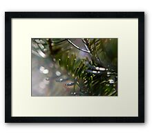 Blue Spruce in the Morning Sun Framed Print