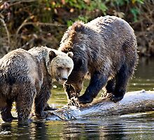 Grizzly Bear & Cub 2 by Randy Giesbrecht