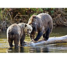 Grizzly Bear & Cub 2 Photographic Print