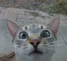 Silly Kitty by shandab3ar