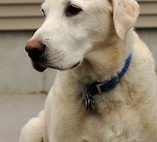 Yellow Dog, Looking Blue by RoyceRocks