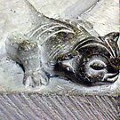 Cat Gargoyle Photo from Medieval France by fanfreluche