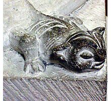 Cat Gargoyle Photo from Medieval France Photographic Print