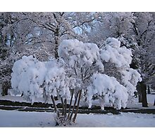 Feb. 19 2012 Snowstorm 79 Photographic Print