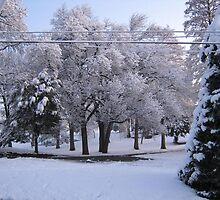 Feb. 19 2012 Snowstorm 84 by dge357