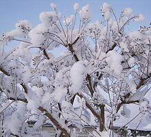 Feb. 19 2012 Snowstorm 93 by dge357