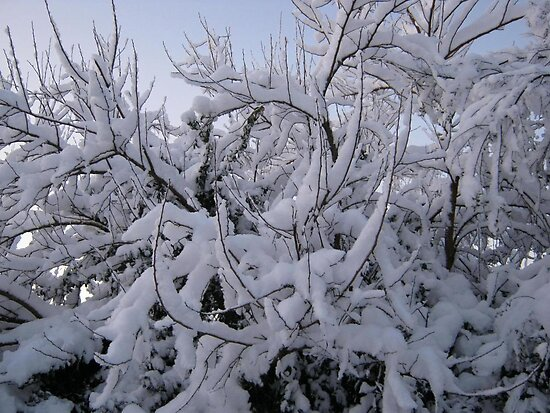 Feb. 19 2012 Snowstorm 95 by dge357