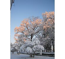 Feb. 19 2012 Snowstorm 99 Photographic Print