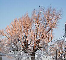 Feb. 19 2012 Snowstorm 101 by dge357