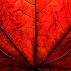 Autumn Red by RaphArt