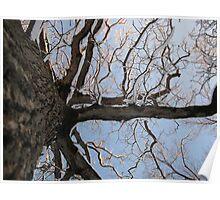 Feb. 19 2012 Snowstorm 105 Poster