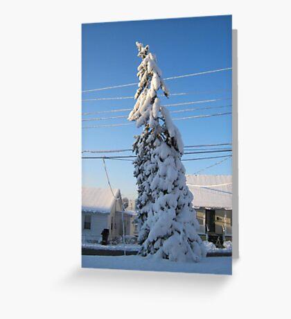 Feb. 19 2012 Snowstorm 109 Greeting Card