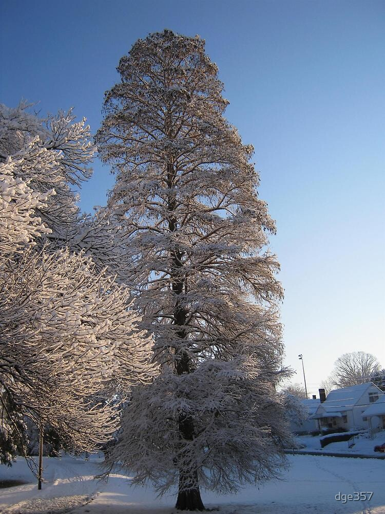 Feb. 19 2012 Snowstorm 110 by dge357