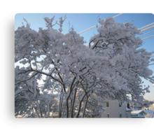 Feb. 19 2012 Snowstorm 116 Canvas Print
