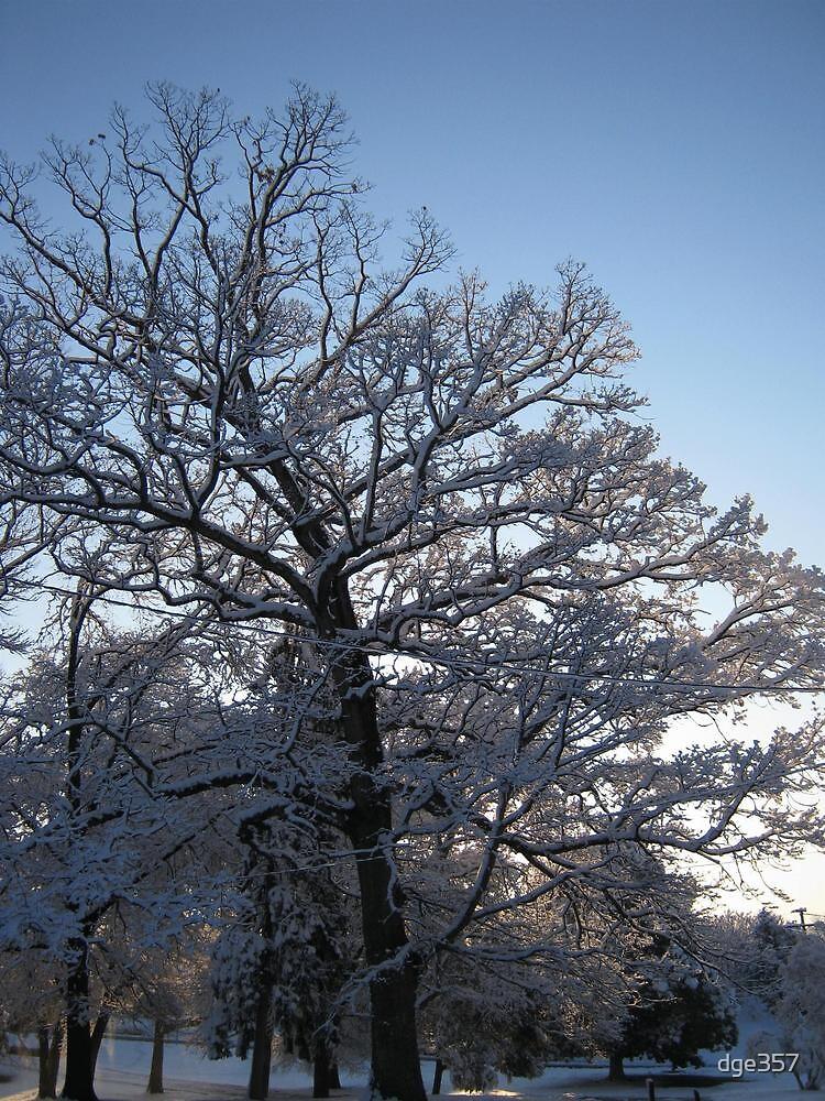 Feb. 19 2012 Snowstorm 118 by dge357
