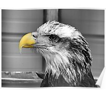 Eagle (selective color) Poster